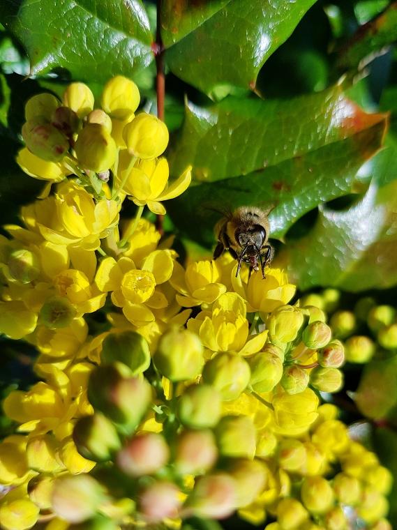 Auch die flotte Biene, die sich fotogen in Szene setzte, erfreute mich.