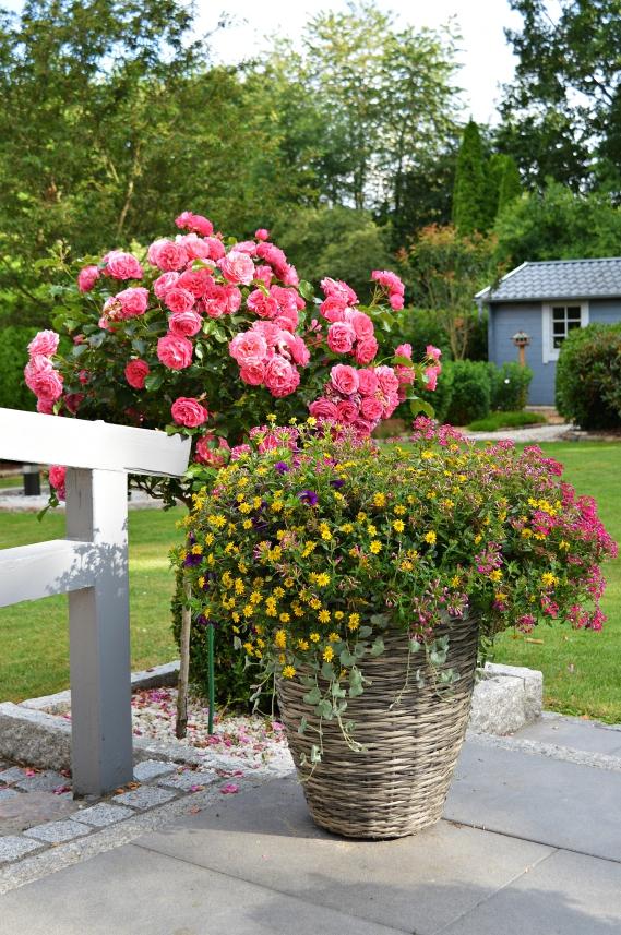 Für Instagram habe ich daher vor kurzem einen Gartenrundgang gefilmt. Diesen könnt Ihr Euch auf meinem Instagram Account @sunshines_living in den Highlights unter der Rubrik Sweet Home ansehen
