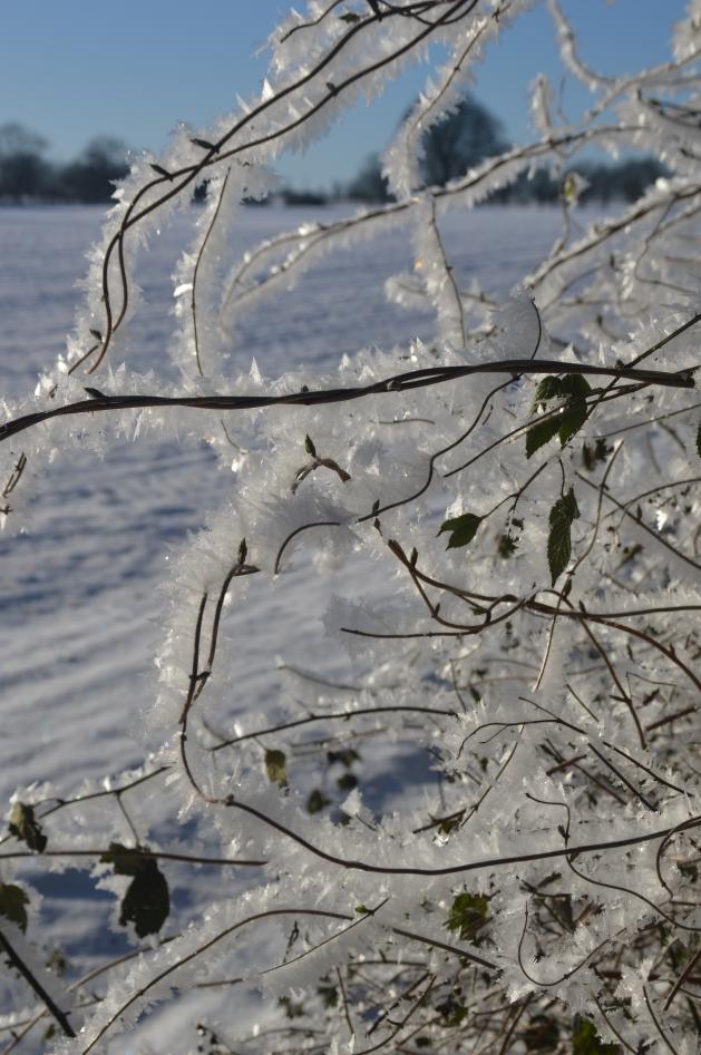 Frost und Schnee in Norddeutschland