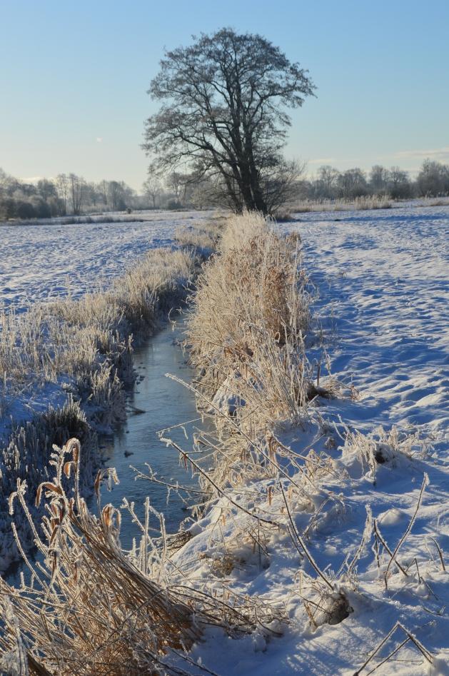 """Im Januar noch wünschte ich mir einen """"richtigen"""" Winter mit viel Schnee"""