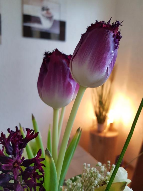 Tulpen wachsen in der Vase weiter