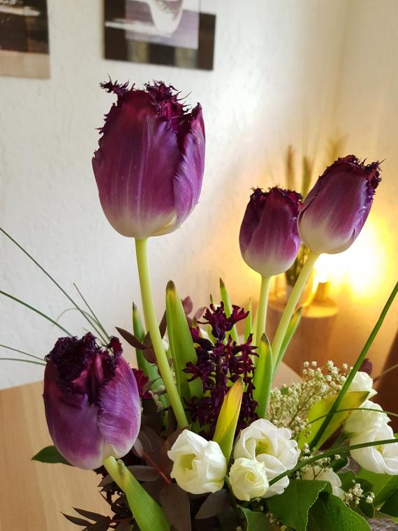 Tulpen wachsen im Wasser weiter