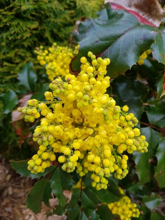 Mit den Blütenbildern wünsche ich Euch ein wunderschönes Wochenende